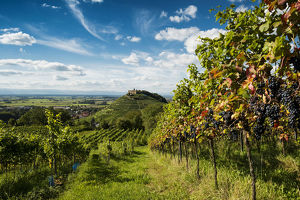 vineyards staufen castle rhine valley staufen