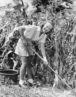Woman hoeing in field of corn