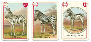 Three zebra playing cards Victorian animal families game