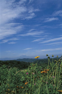 photographer galleries/nature production collection/cirrus cloud distant mount fuji