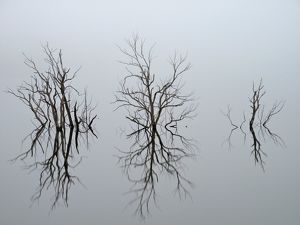 Drowned trees in Lake Rowallan, northwest Tasmania