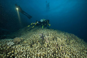 photographer galleries/mark spencer/dusk night dive great barrier reef