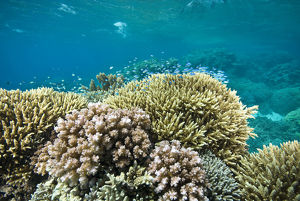photographer galleries/mark spencer/healthy hard coral reef