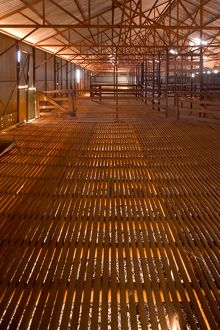 Interior of historic shearing shed at Muggon Station