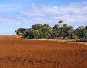 Land cleared of native vegetation (originally mallee) for agricultural use,
