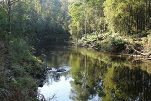 Leven River with reflection of eucalypt forest