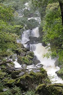 Lodore Falls after rain, dropping about 28 m.