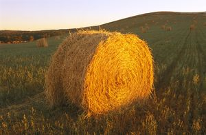 Round hay bale in harvested field