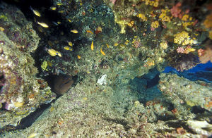 photographer galleries/mark spencer/scene coral ledge