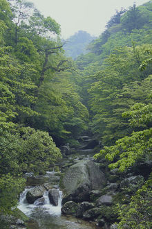 photographer galleries/nature production collection/stream flowing dense virgin forest shiratani unsuikyo