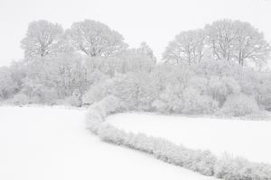 Trees, hedges and fields after heavy snowfall