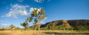 Tropical grassland, tree and hills in remote Mornington Station,