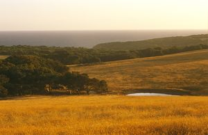 View over farmland towards the ocean