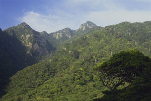 photographer galleries/nature production collection/virgin forest mountains yakushima