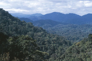 photographer galleries/nature production collection/vista highland tropical rainforest canopy altitude