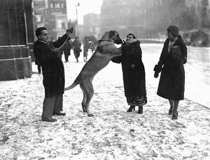 Crufts great dog show opens in snowstorm Dr. and Mrs. Tarapore and their Great Dane