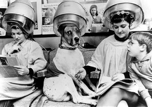 Dog at the hairdresser