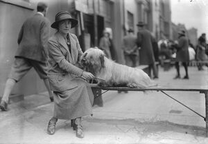 Dog show at Holland Park. Lady Marcia Miles with her Skye Terrier. 16 April 1925