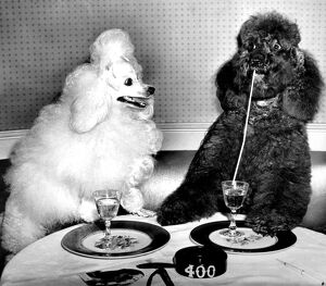 Dog socialites Candide and Koko on right have a dinner martini at the 400 Restaurant