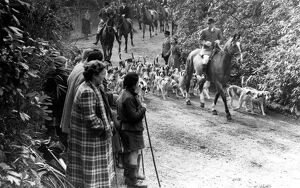 The East Sussex Foxhounds pass down the drive of Lord Burghley's home, Tilton