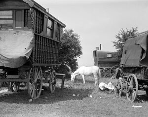Gypsy caravans parked on Epsom Downs during the Epsom Races . Late 1940s , early 1950s