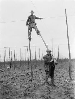 A man uses stilts for the stringing of the hop poles. 1937