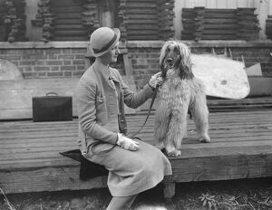 The owner of an Afghan Hound, getting ready for The Kennel Club show at the Crystal Palace