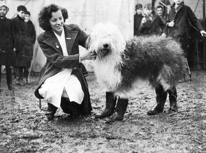Pastel Blue Autocrat, a beautiful old English sheepdog, came to the West Country
