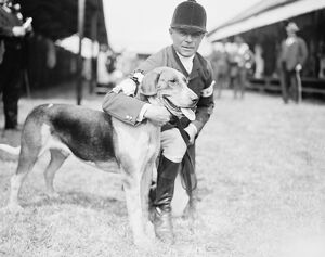 Peterborough foxhound show was held at Peterborough on Wednesday. Tom Newman the