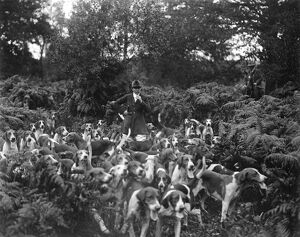 Society Hunt with a lady Master of Foxhounds. Miss Amy Fairhurst with the pack