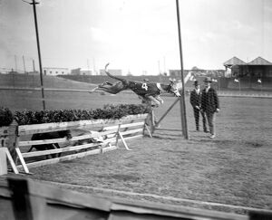Trials at Harringay Greyhound Course. one of the dogs taking a hurdle
