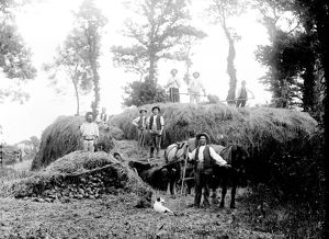Haymaking near St Buryan, Cornwall. Late 1800s
