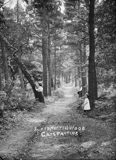 Scott's Wood, Constantine, Cornwall. Early 1900s