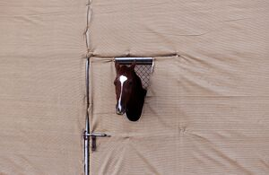 ARABIAN HORSE IN A PEN DURING A FALCONRY FESTIVAL