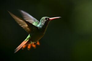 COLOMBIA-ANIMALS-FEATURE-HUMMINGBIRD