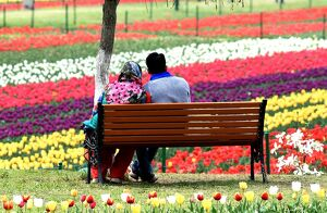 INDIA-KASHMIR-TOURISM-TULIPS