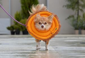 JAPAN-ANIMAL-DOG-OFFBEAT