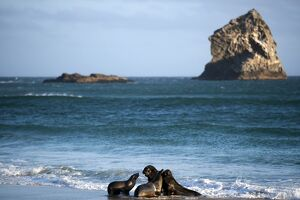 NEW ZEALAND-ANIMALS-SEA LIONS