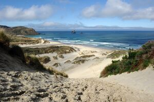 NEW ZEALAND-NATURE-BEACH