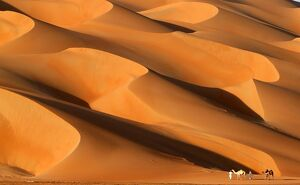 UAE-NATURE-DESERT-FESTIVAL