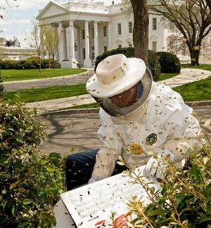 US-WHITE HOUSE-BEES