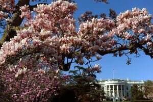 US-WHITE HOUSE-FLOWERS