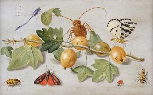 Still life of branch of gooseberries, with a butterfly, moth, damsel fly and other insects
