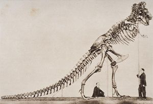 Skeleton of the Tyrannosaurus Rex, in the American Museum of Natural History,