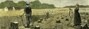 Canada, Wheat Harvest in new land, 1880