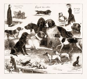 THE DOG SHOW AT THE CRYSTAL PALACE, LONDON, UK, 1876: 1