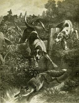 Hunt, Austria, Fox, 1891