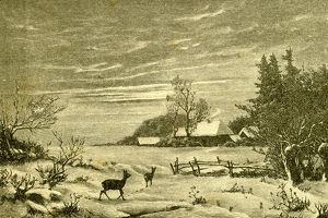 Winter Time, Deer, Austria, 1891