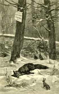 Hunting, Fox, Austria 1891