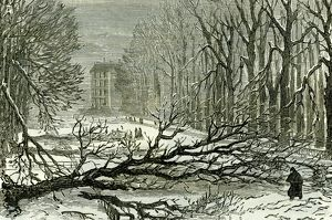 Kensington Gardens, London, 1887, Trees blown in Broad walk